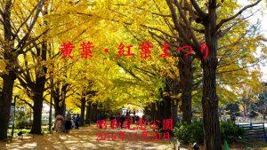 黄葉・紅葉まつり-昭和記念公園2019年11月